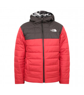 ae59e4268 QUILTED JACKET - CoccoleBimbi